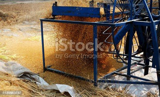 Rice paddy cleaning using winnowing fan.