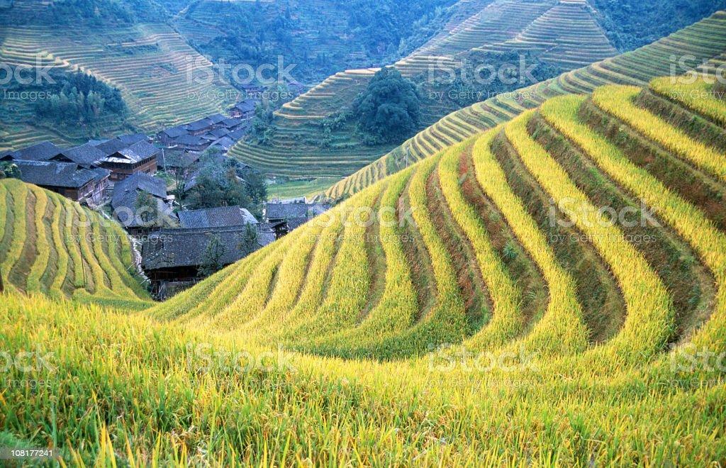 Rice paddy in Longsheng royalty-free stock photo