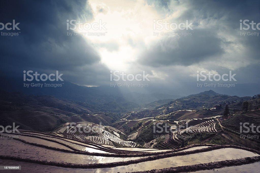 Rice paddy in Longsheng, stock photo
