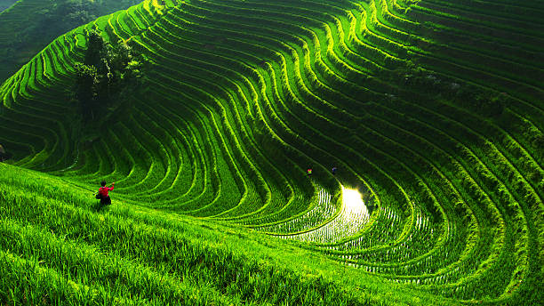 rice paddy in longsheng - terras veld stockfoto's en -beelden