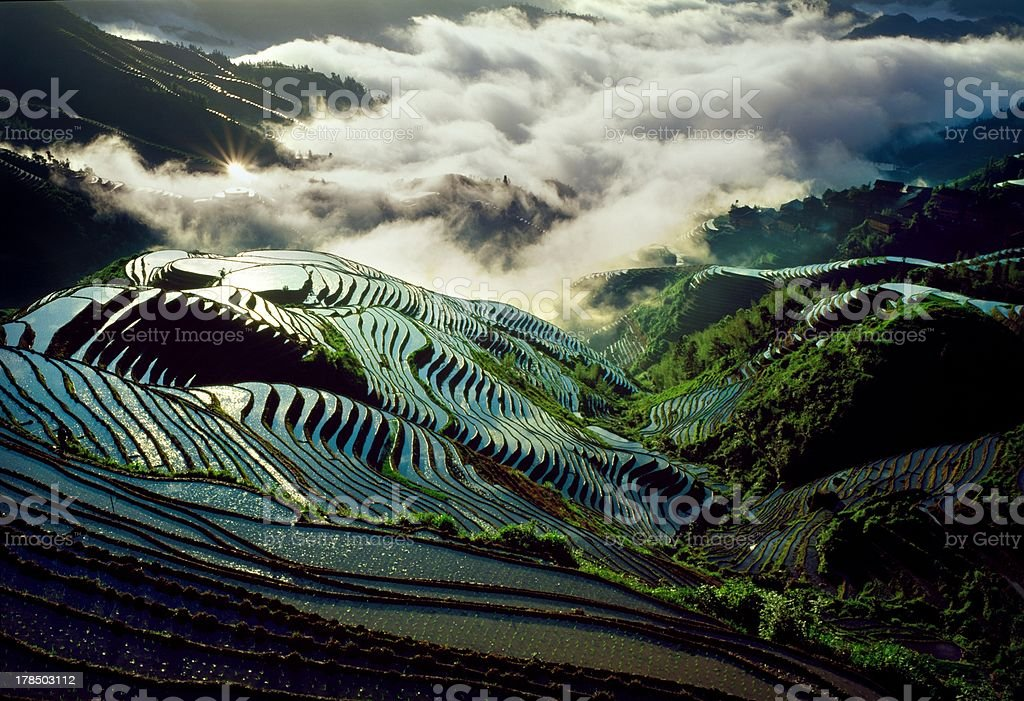Rice paddy in the morning Longsheng stock photo