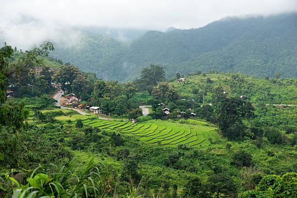 pole ryżowe w pobliżu kalaw plateau, myanmar - burma home do zdjęcia i obrazy z banku zdjęć
