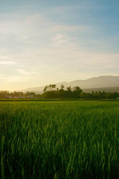 夕暮れの空の田んぼ - sustainability ストックフォトと画像