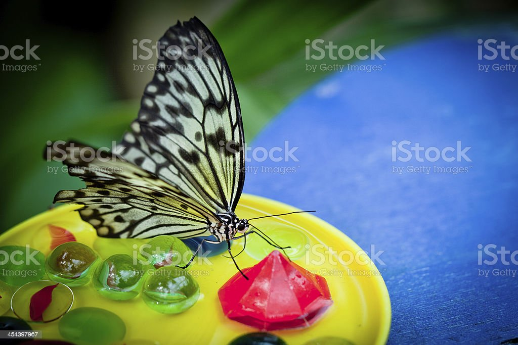 Rice paper butterfly royalty-free stock photo