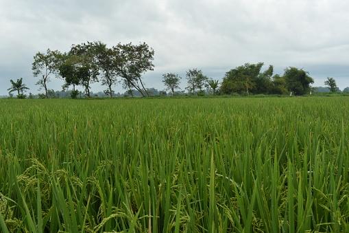 Keindahan Alam Retret Pedesaan Mewah
