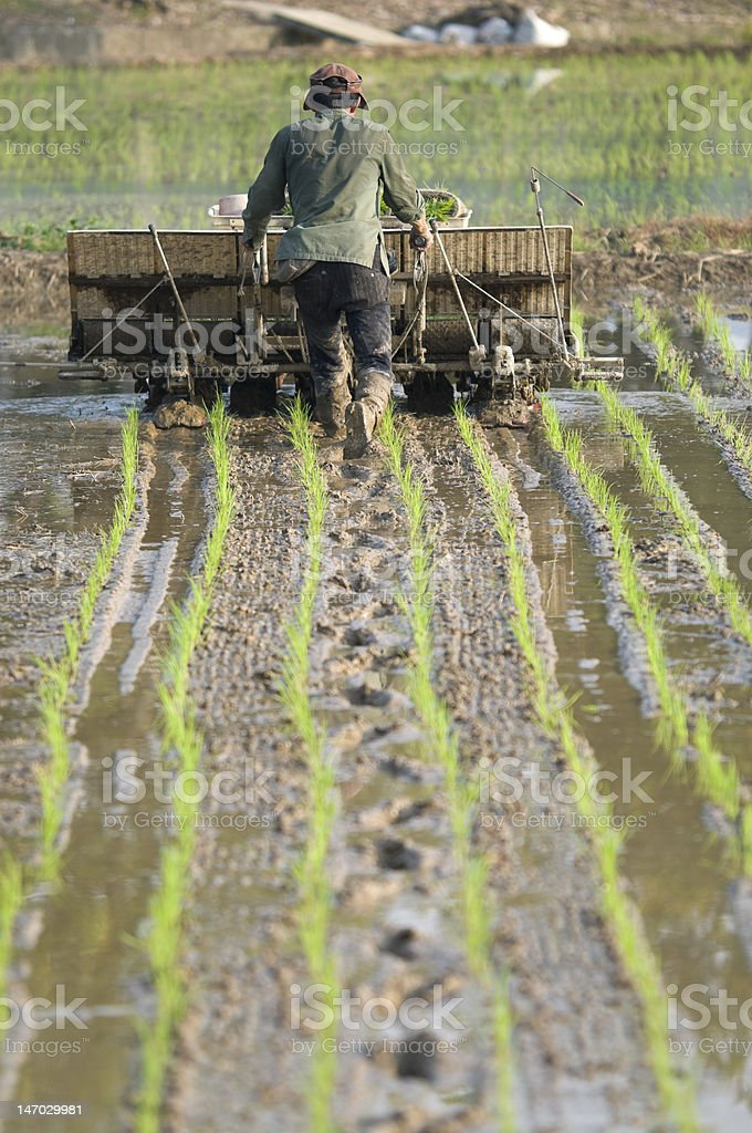 Rice Planter and Farmer in Taiwan royalty-free stock photo