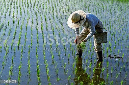 istock Rice Planting 109724079