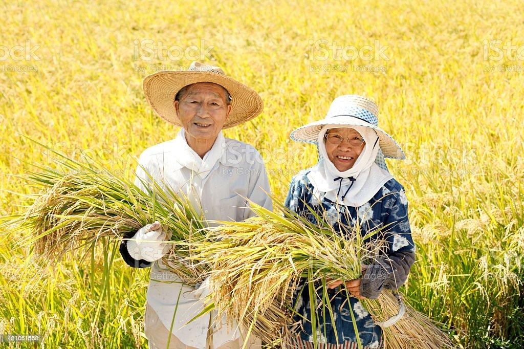 Colher de arroz - foto de acervo