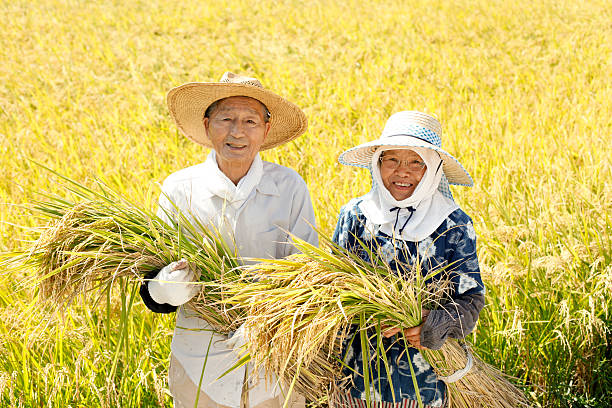Rice reaping Rice reaping satoyama scenery stock pictures, royalty-free photos & images
