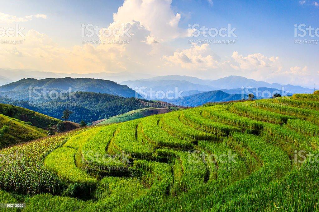 Rice terrace in chingmai stock photo