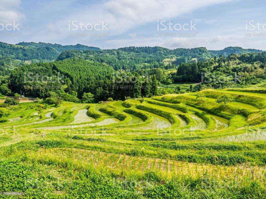 Terraza De Arroz En Japón Foto De Stock Y Más Banco De