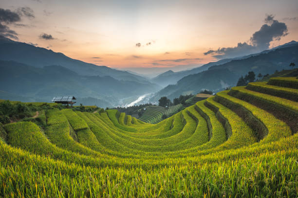 rice terrace mountains in mu can chai, vietnam - burma home do стоковые фото и изображения