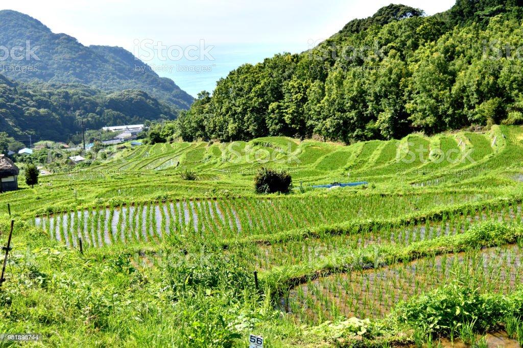 Terraza De Arroz De Ishibe Foto De Stock Y Más Banco De Imágenes De Agricultura