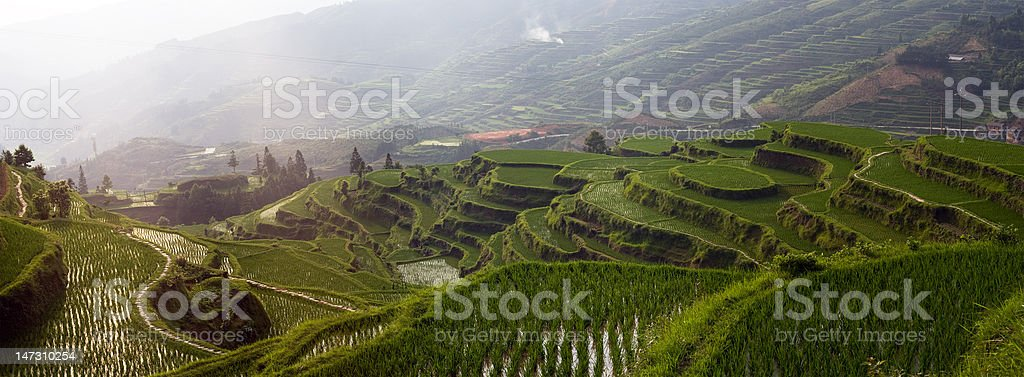 Rice terrace on the mountain stock photo