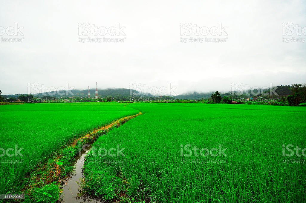 Rice terraces at Mae Hong Son royalty-free stock photo