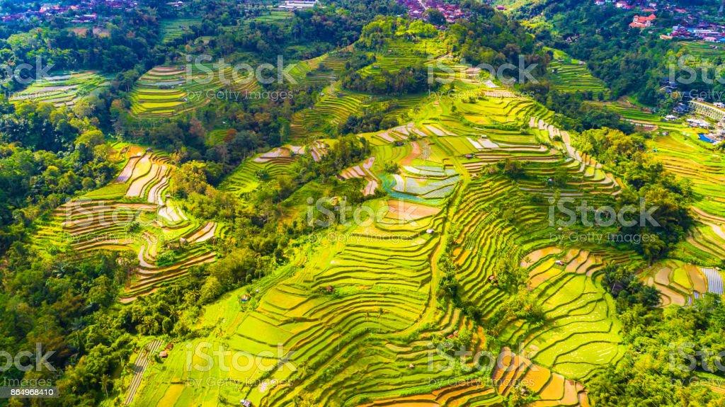 Terrazas De Arroz Bali Indonesia Foto De Stock Y Más Banco