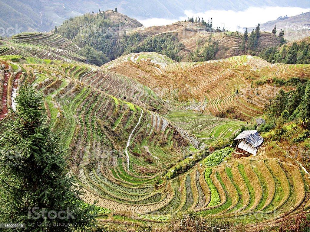 Rice Terraces, China stock photo