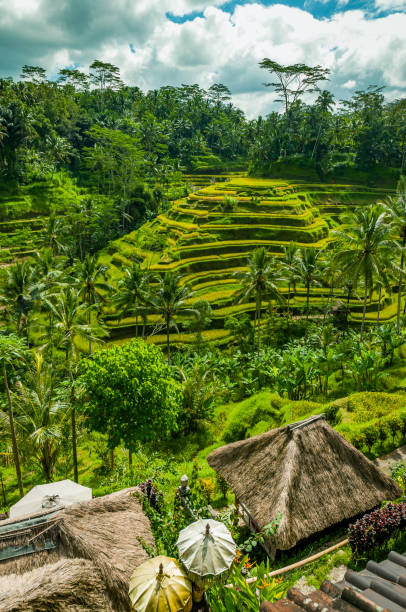 Rice terraces in Bali stock photo