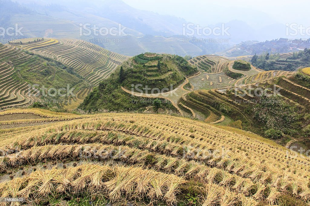 Rice terraces in Dazhai, Guangxi, China Beautiful landscape of rice terraces in Dazhai, Guangxi, China Cereal Plant Stock Photo