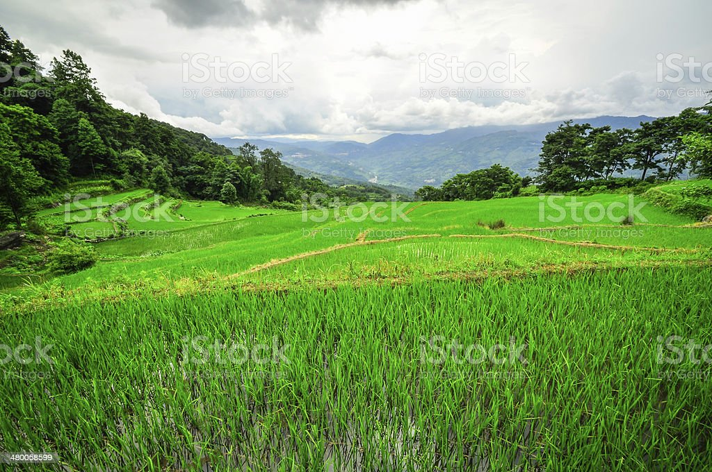 South China, Yunnan - 2011: Rice terraces in highlands stock photo