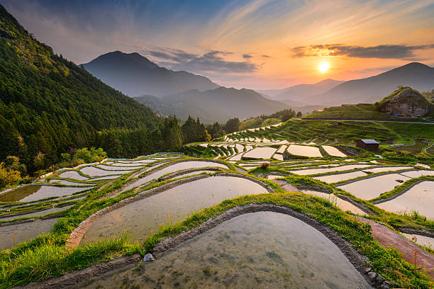 Rice Terraces in Japan Rice terraces at sunset in Maruyama-senmaida, Kumano, Japan. satoyama scenery stock pictures, royalty-free photos & images