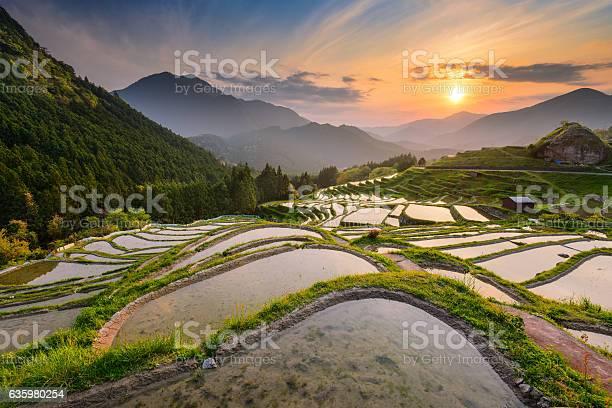 日本の棚田 - アジア大陸のストックフォトや画像を多数ご用意