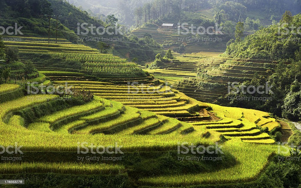 Rice Terraces in Mu Cang Chai in Vietnam stock photo