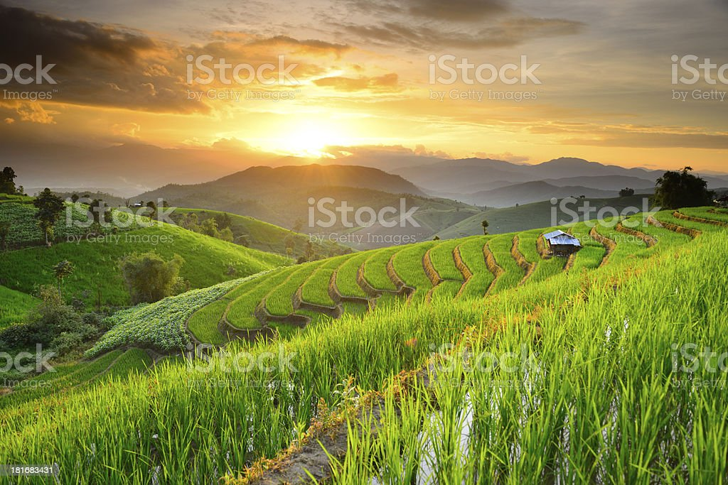 Rice Terraces in Northern of Thailand stock photo