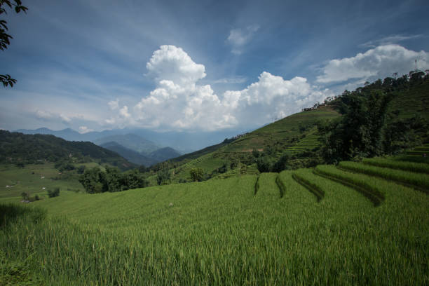 Rice terraces in summer in Vietnam stock photo