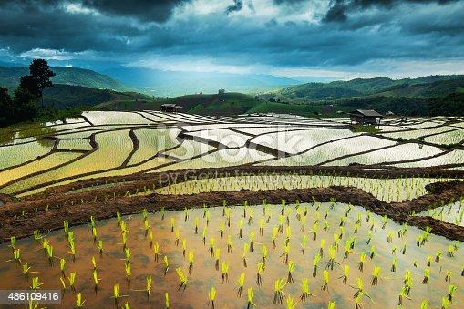 607590542istockphoto Rice terraces in Thailand. 486109416