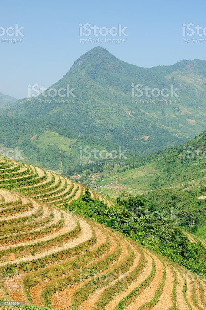 Rice terraces in Vietnam stock photo