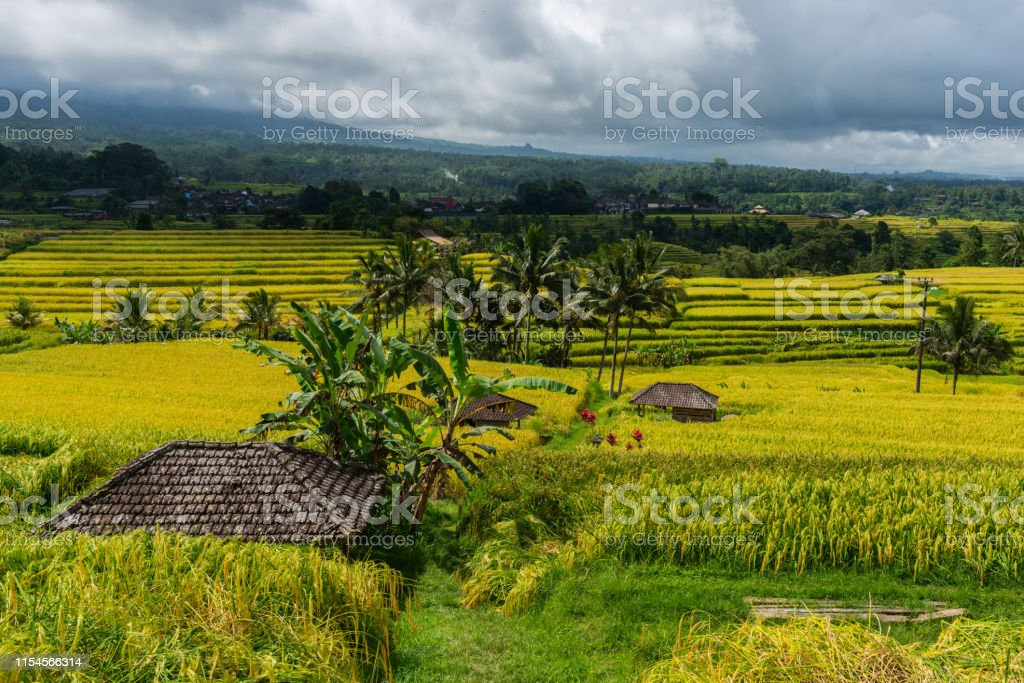Rice Terraces Landscape. Farmer\'s Houses in the Rice Terraces