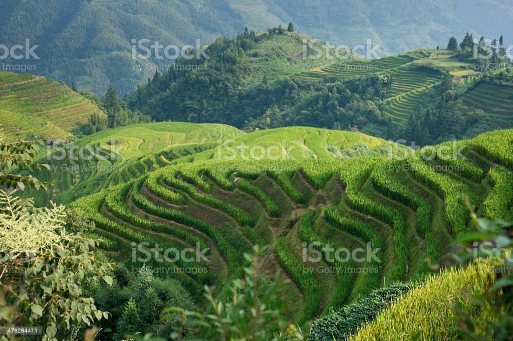 Rice Terraces of Longji Titian near Ping'an in China royalty-free stock photo