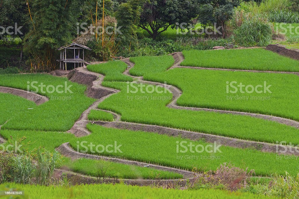 Rice terraces of northern Thailand. royalty-free stock photo