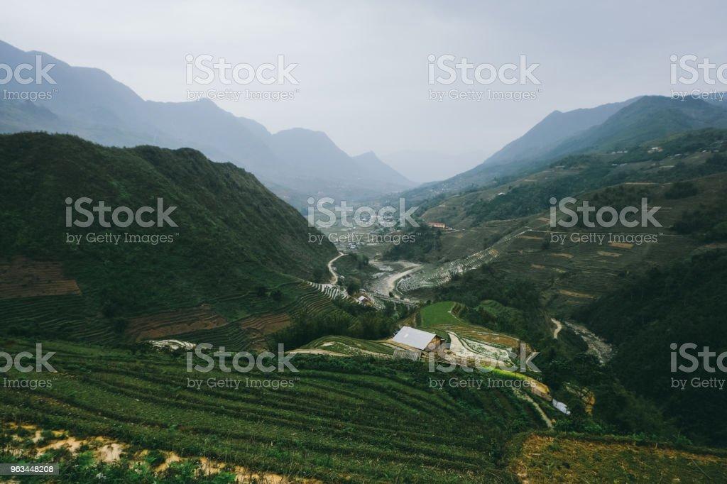 Rice terraces of Northern Vietnam - Zbiór zdjęć royalty-free (Azja Wschodnia)