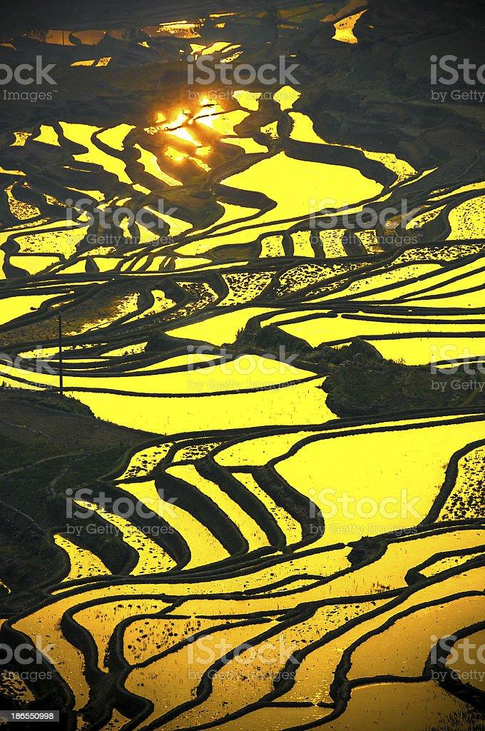 Rice terraces of Yuanyang, Yunnan, China royalty-free stock photo