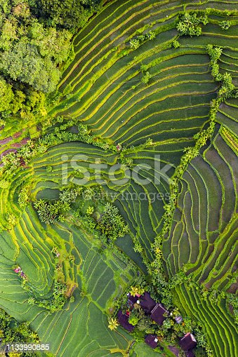 Rice fields on Bali, view from above. Aerial drone shot