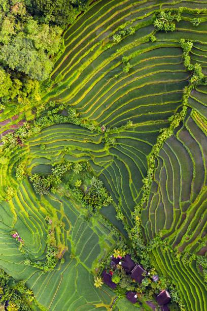 rijstterrassen op bali - sawa stockfoto's en -beelden