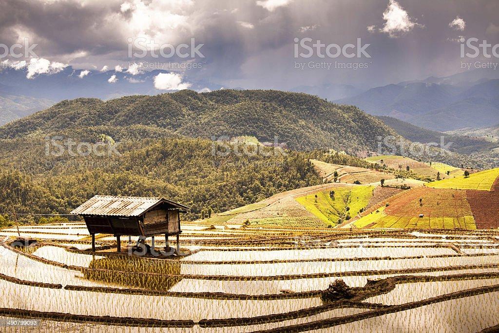 Rice terraces on the mountain. stock photo