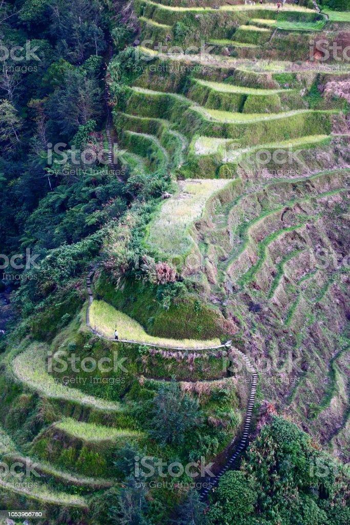 Terrazas De Arroz Filipinas Foto De Stock Y Más Banco De