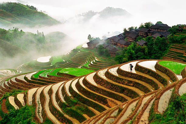 Rice Terraces Rice Terraces and farming village in Longsheng, Guangxi province, China. rice paddy stock pictures, royalty-free photos & images