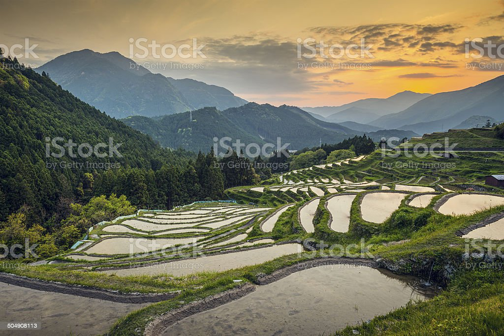 Rice Terraces stock photo