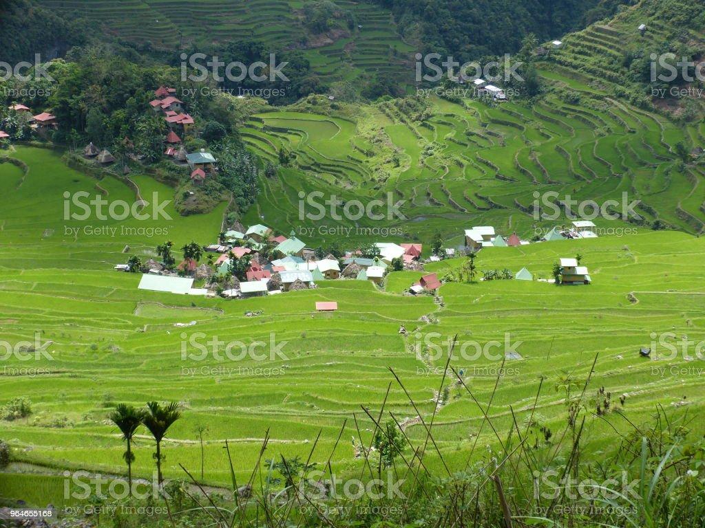Rice terraces royalty-free stock photo