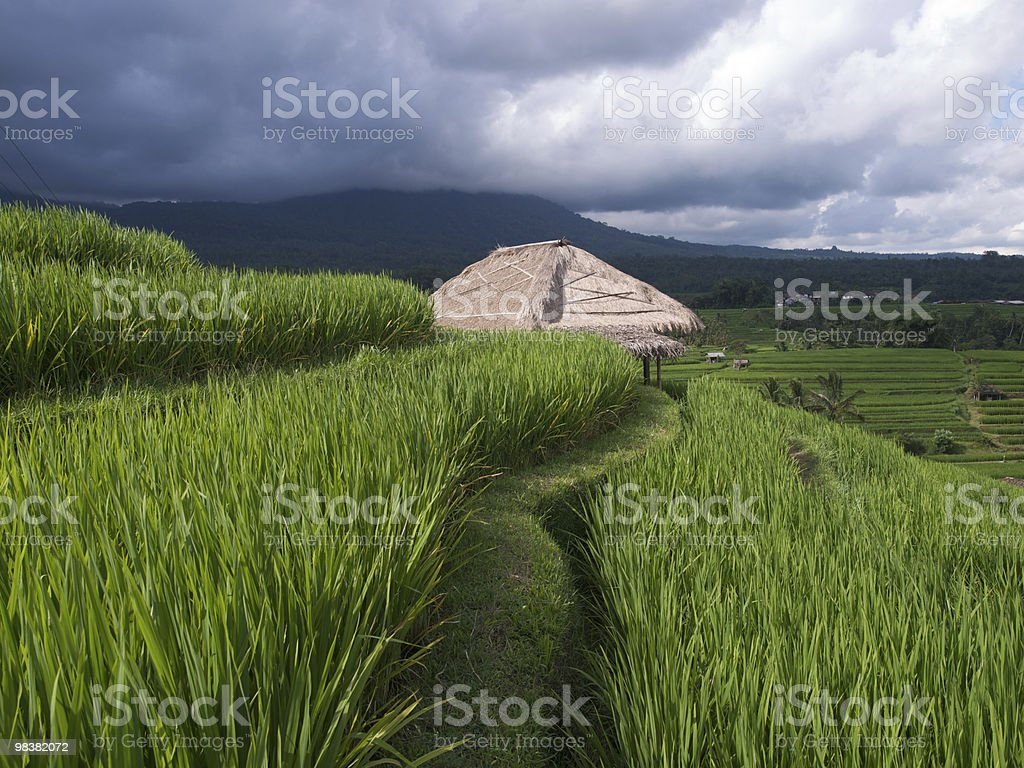 Rice terraces royalty-free stock photo