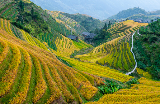 Rice Terraces, Ping An, China