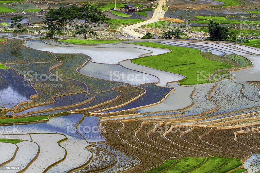Rice Traces in Tu Le Valley stock photo