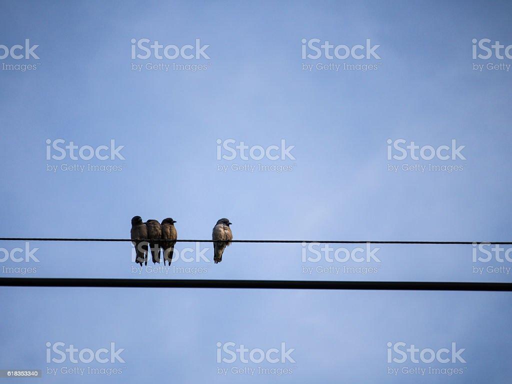 Ricebird Gathered stock photo