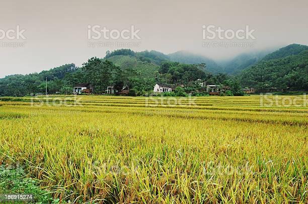 Ricefields and Mountains in northwest Vietnam.