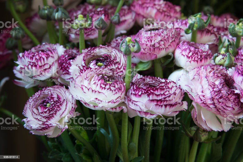 ab13646f Rich bouquet of flowers. Fresh spring bouquet. Summer background - Stock  image .