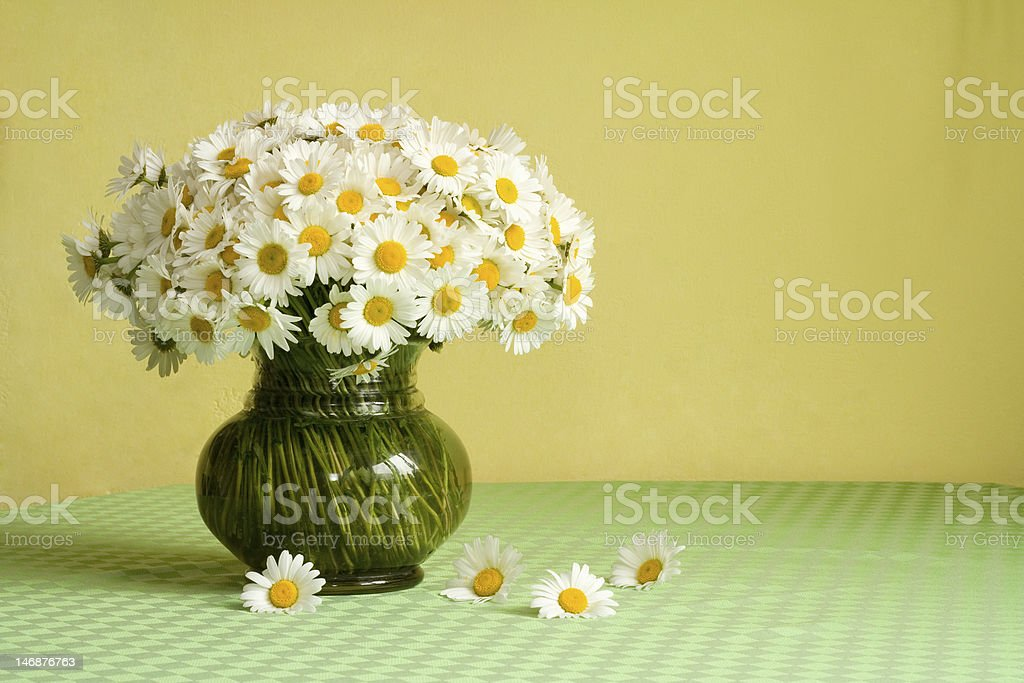 Rich daisy bouquet on the table royalty-free stock photo